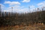 Cassiar Highway Fire (2011), British Columbia. Sarah Bisbing, 2011.