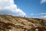 Yukon Territory subalpine zone. Sarah Bisbing, 2011.