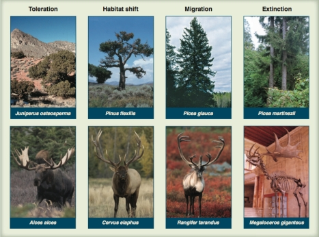 Trees On The Move Debating Assisted Migration In Climate Change